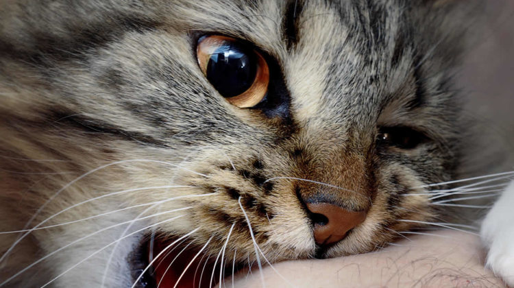 Why Does My Cat Bite Me?