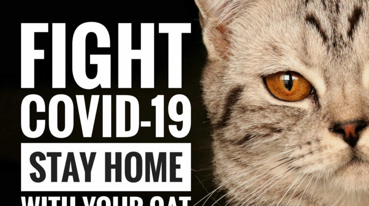 Can Cats Get Infected by COVID-19
