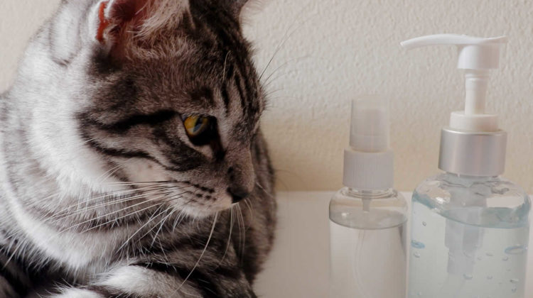 Which smells do cats hate, DIY cat repellent spray
