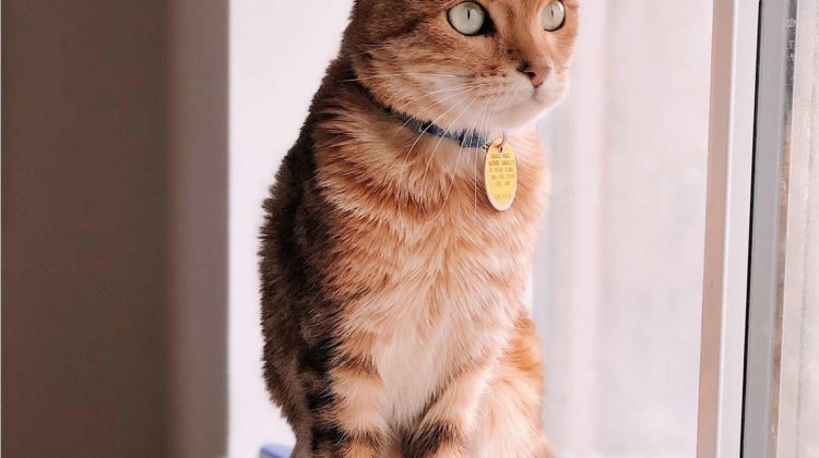 Best cat flea collars