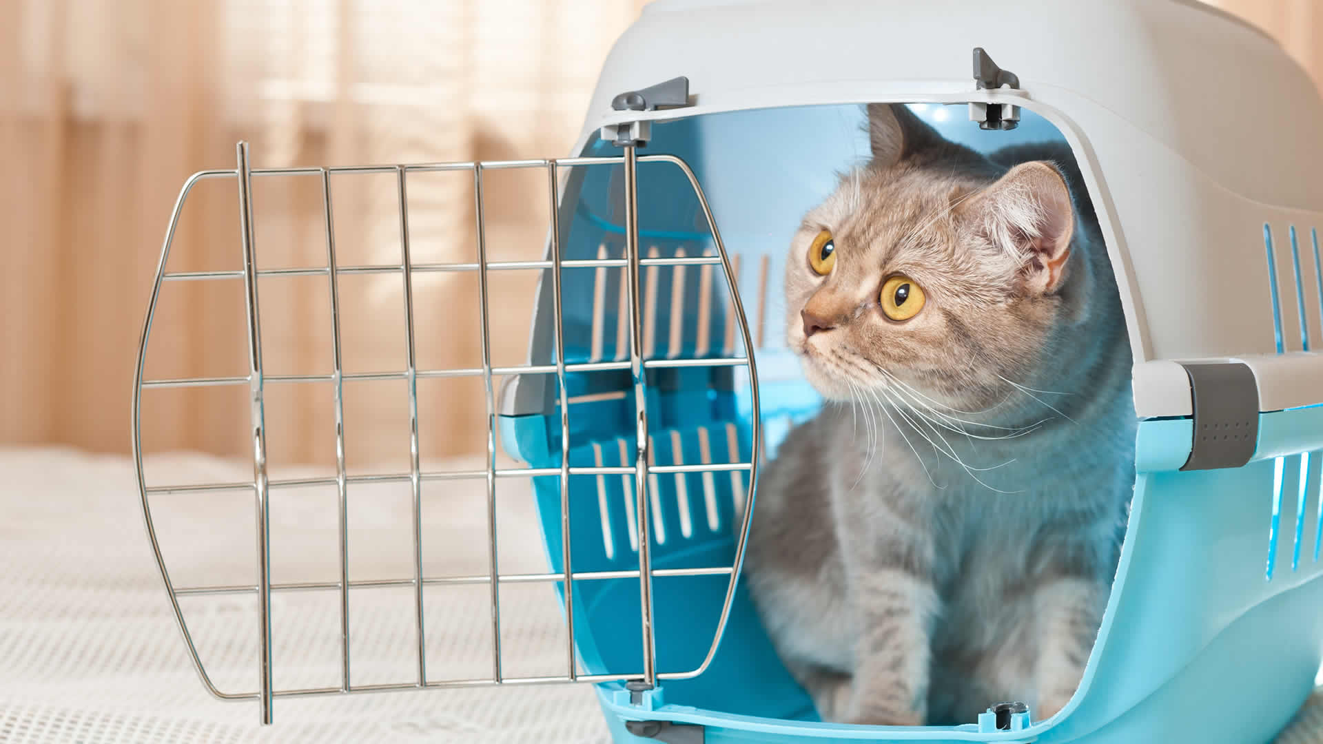 Training a cat for a carrier