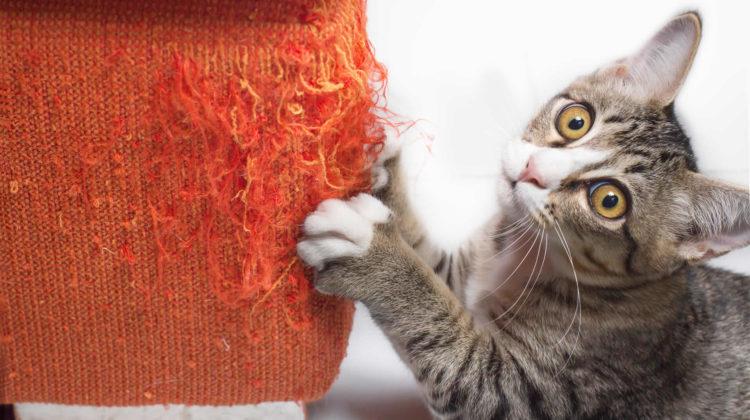 Anti Scratch Sprays for Cats