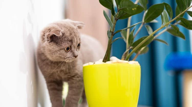 Are ferns toxic to cats