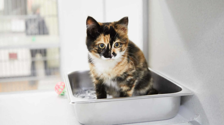Best Cat Litter for Small Apartment