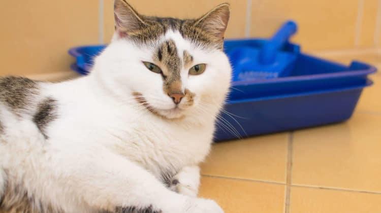 Best Litter Boxes for Senior Cats