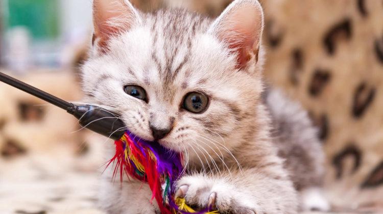 Can a cat overdose on catnip