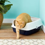 Chewy Frisco Open Top Cat Litter Box