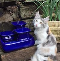 Chewy - Miaustore Dog Cat Ceramic Water Fountain