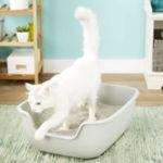 Chewy PetFusion BetterBox Non-Stick Cat Litter Box