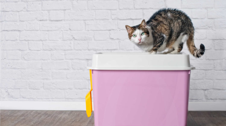 Extra Large Litter Box for Big Cats