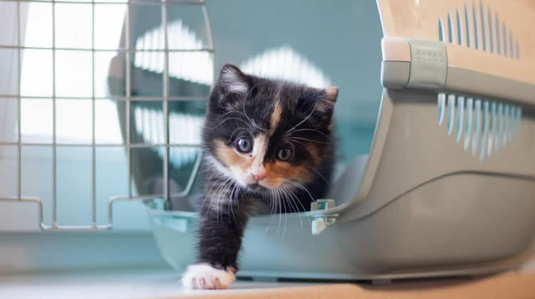 Cat Carriers With Litter Box