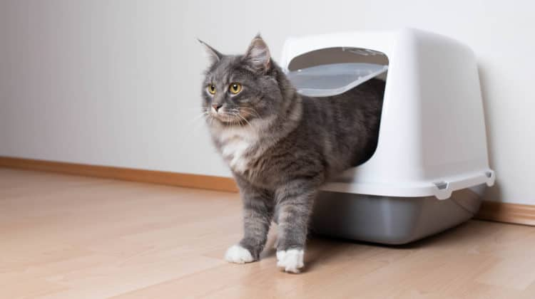 Litter boxes for high spraying cats