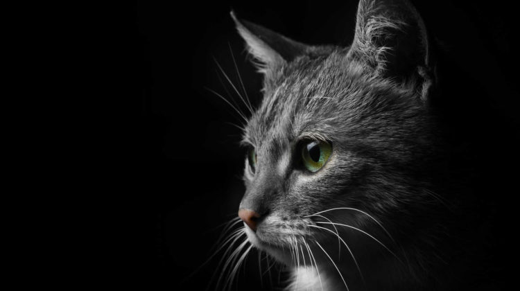 Why do cats cry like a baby at night