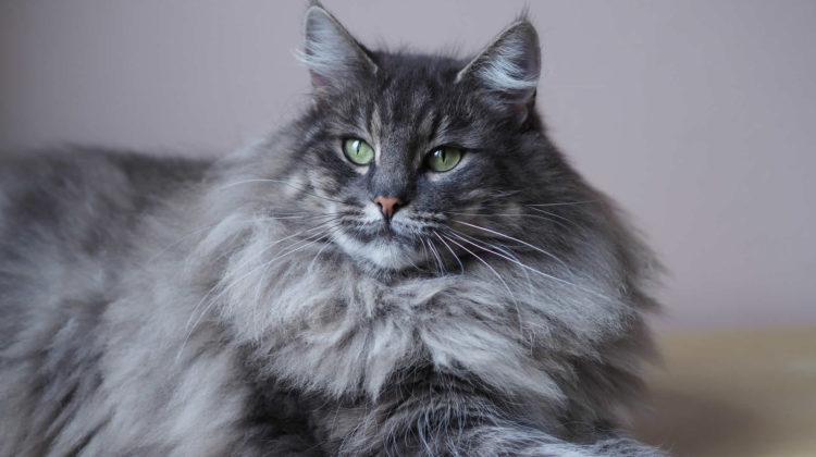 Best Air Purifiers for Cat Hair
