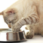 Best Cat Bowls for Whisker Fatigue