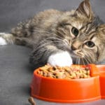Best Cat Food Bowls to Slow Down Eating