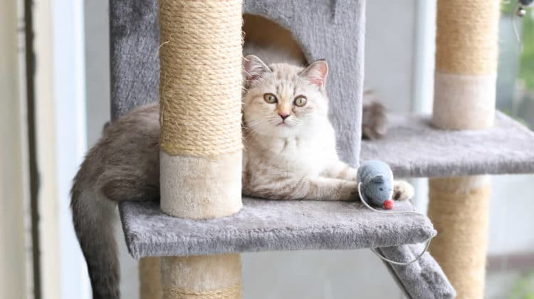Unique Cat Trees for Large Cats