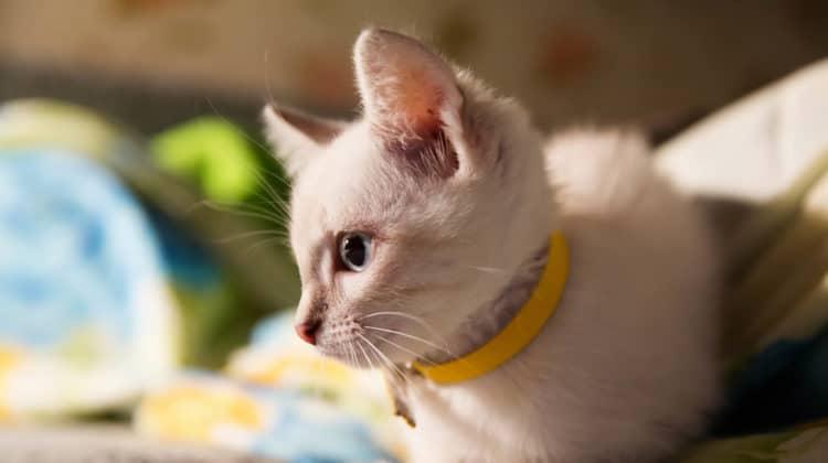Best Breakaway Cat Collars