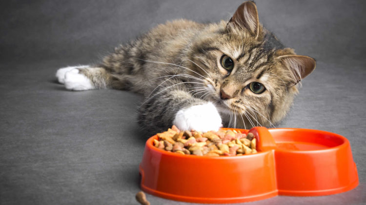 Cat stopped eating dry food but eats treats