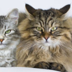 How to help a cat lose weight with multiple cats