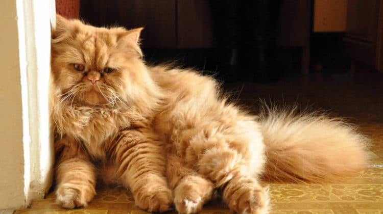 What causes matted cat fur