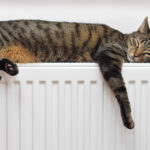 What temperature do cats like?