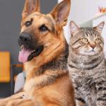 Dog proof cat feeder