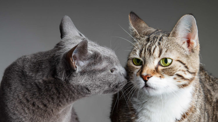 How to Stop My Cat From Bullying My Other Cat