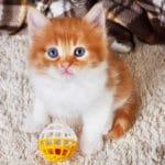 Kitten Chew Toys - Safe & Fun Kitten Teething Toys