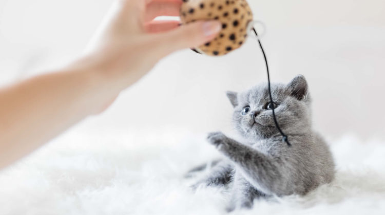 Toys for Cats to Chase