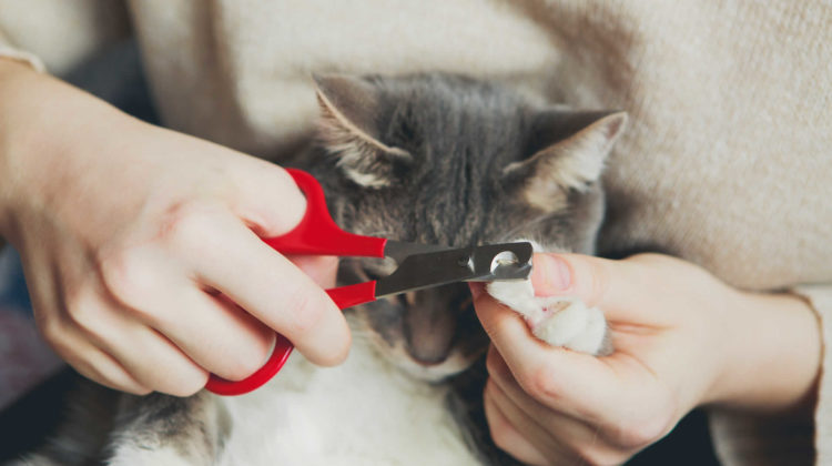 What Happens If You Don't Trim Your Cat's Nails?