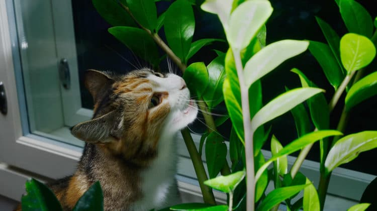 Are ZZ Plants Toxic to Cats