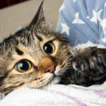 Can You Use Baby Wipes on Cats?