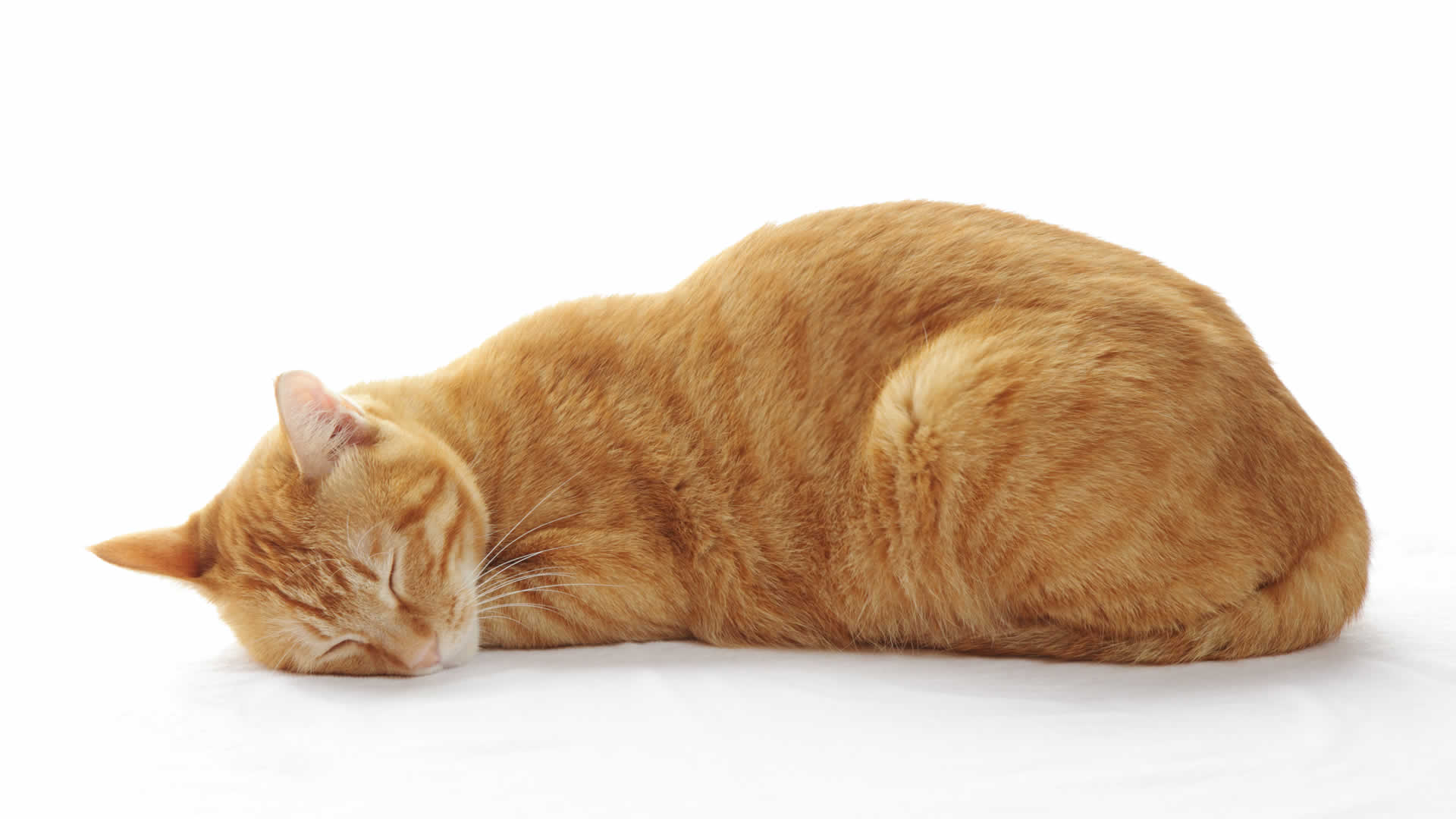 Cat sleeping in a meatloaf position