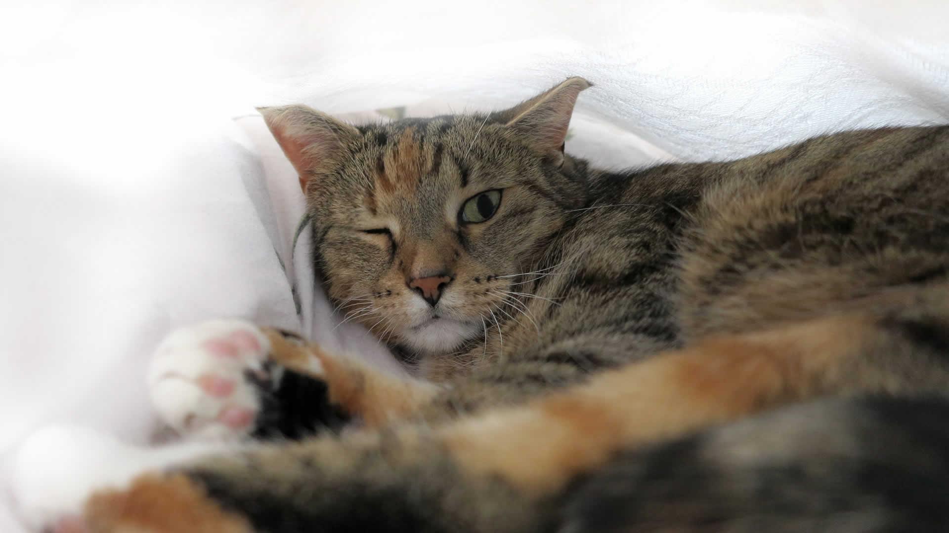 Cat sleeping one eye open