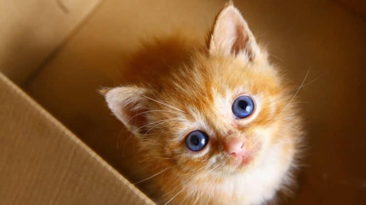 Where Should Kittens Sleep at Night
