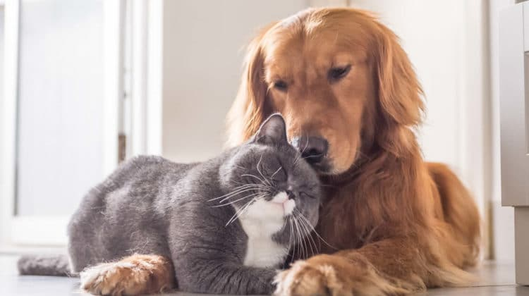 Why Do Cats Smell Better Than Dogs
