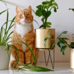 Are Spider Plants Toxic to Cats