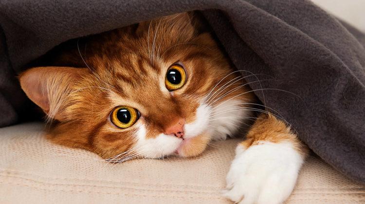 Cat Has Diarrhea But Seems Fine