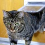 Collar-Activated Cat Doors