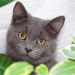 Is Aloe Vera Safe for Cats