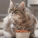 Pros and Cons of Grain Free Diet for Cats