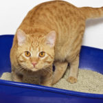 How to Keep Cat Litter Off the Floor