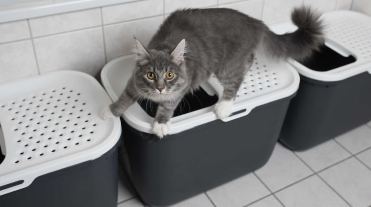 Litter Box Ideas for Multiple Cats