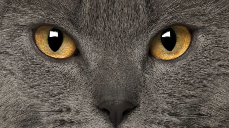 Cats with Big Eyes