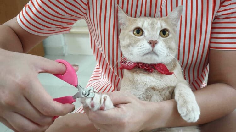 Cat Nails Splitting