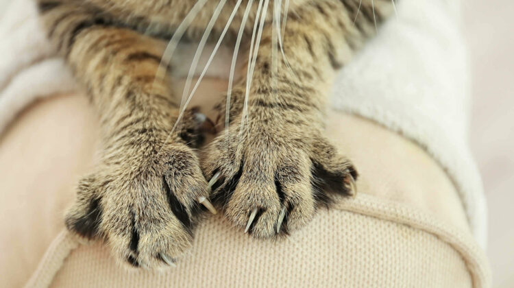 Why Do Cats Bite Their Nails