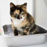 Cat Meows Loudly After Using the Litter Box