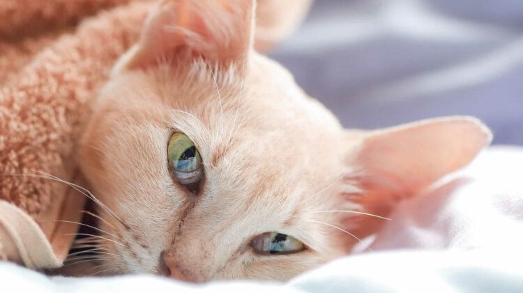 Do Cats Make Weird Noises When Sick