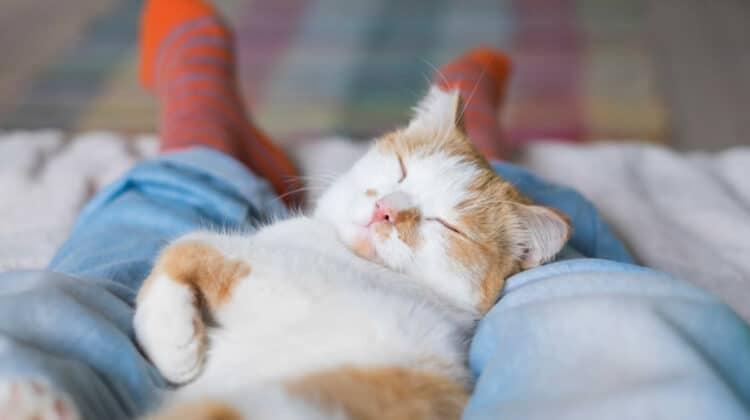 Why Does My Cat Sleep Between My Legs